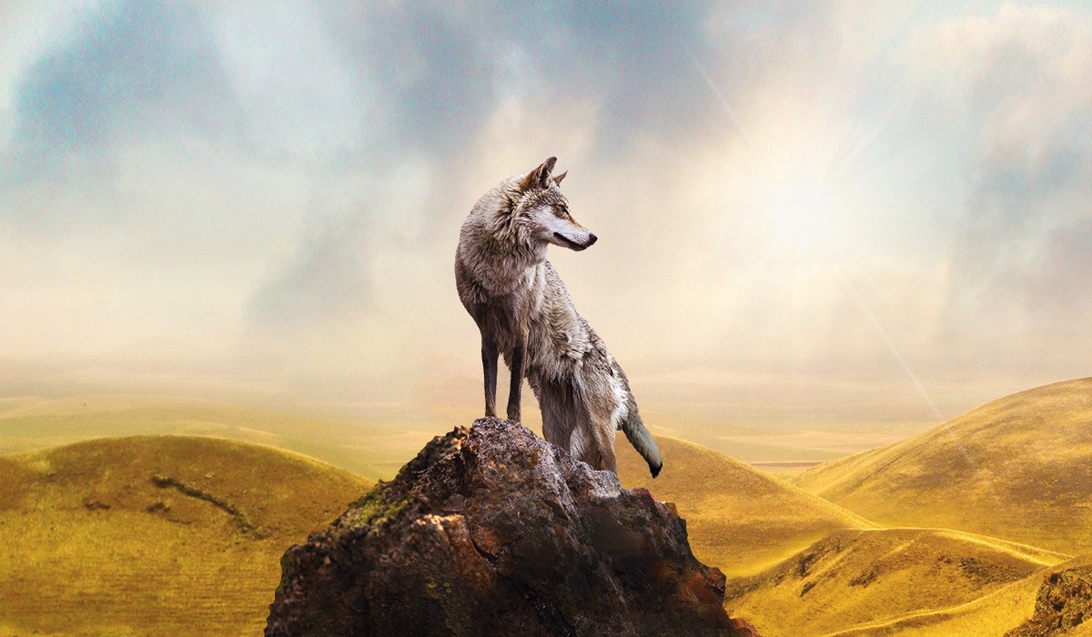 Wolf Totem By James Horner Hqcovers